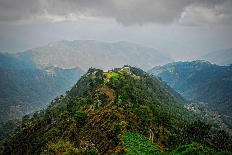 High Angle View Of Lush Foliage