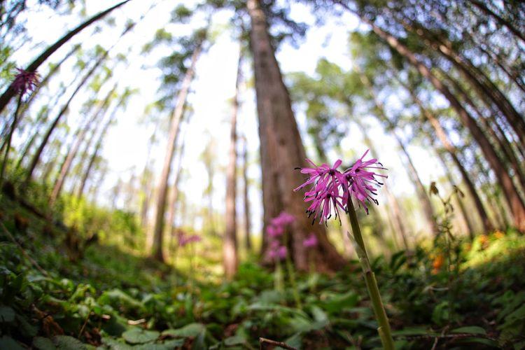 写真撮ってる方に名前聞いたんよ❗でも忘れたんよ💦でも何方かアップされてた。猩々袴(ショウジョウバカマ)だって❗ 一目惚れんず Flower Head Flower Tree Summer Purple Close-up Sky Plant