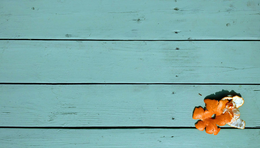 Orange peel on cyan blue picnic table with space for text or logo