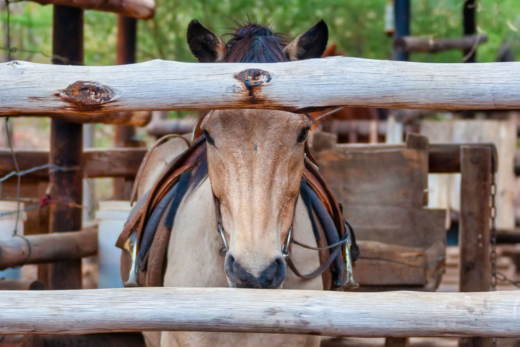 Portrait of horse on wooden fence