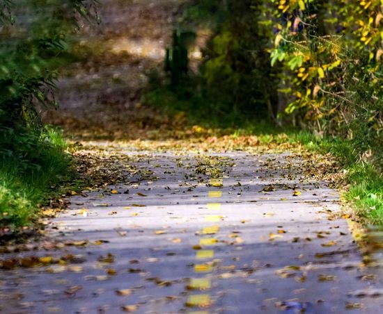 Road No People Nature Day Plant Outdoors Tree Grass Water Puddle Autumn🍁🍁🍁 Autumn Colors Atumn Nature Road Green Color