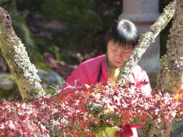 In the garden on miyajima Island... Japanese Culture Japanese Garden Japan Miyajima Itsukushima Fall Fall Colors Fall Leaves The Purist (no Edit, No Filter) The Places I've Been Today The Great Outdoors - 2015 EyeEm Awards The Traveler - 2015 EyeEm Awards The Street Photographer - 2015 EyeEm Awards The Calmness Within