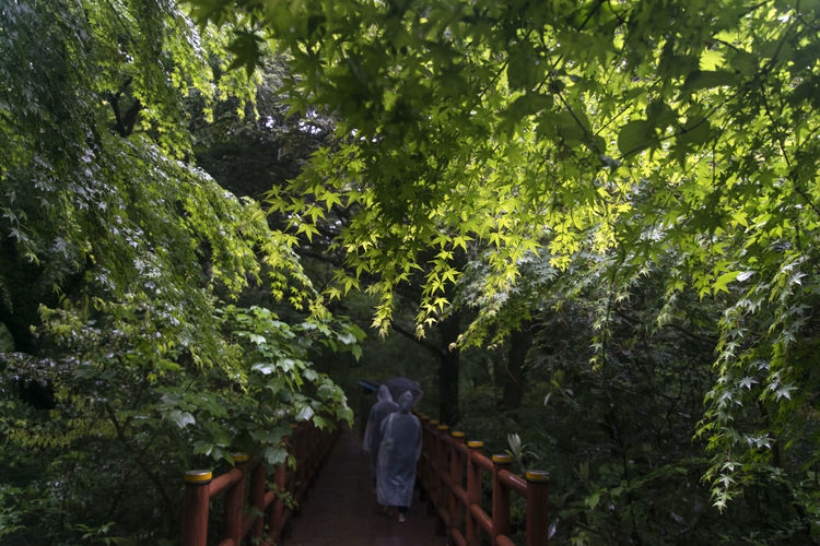 rainy day of Bijarim which is a famous forest in Jeju Island, South Korea Beauty In Nature Bijarim Day Forest Full Length Green Color Growth JEJU ISLAND  Maple Men Nature One Person Outdoors Pathway People Rainy Real People Standing Statue Tree