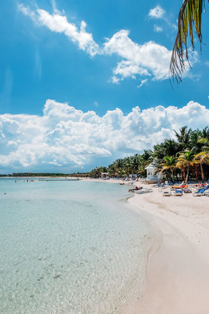 Mexico Palm Tree Beach Beach Day Beauty In Nature Blue Blue Sky Clouds Coconut Palm Tree Land Nature Ocean Outdoors Palm Tree Sand Scenics - Nature Sea Sky Summer Tranquil Scene Tranquility Tree Tropical Climate Water Waterfront