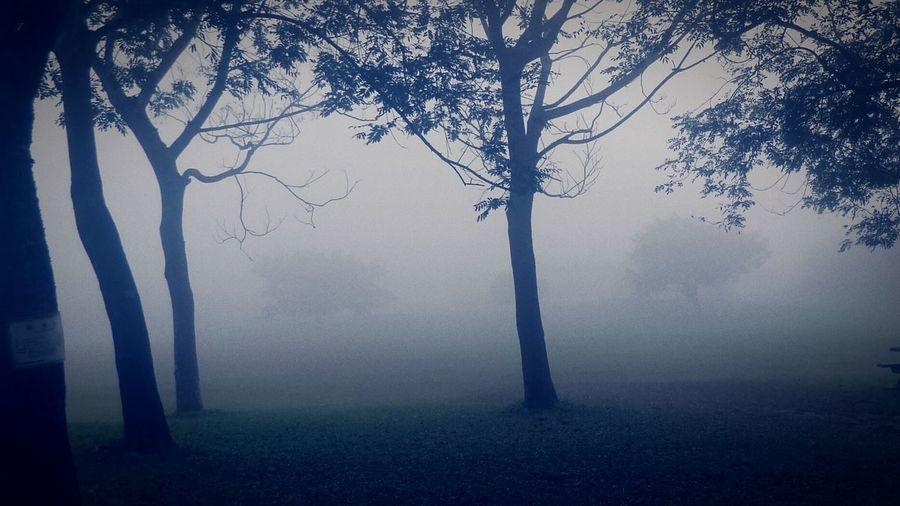 霧中風景 Halloween
