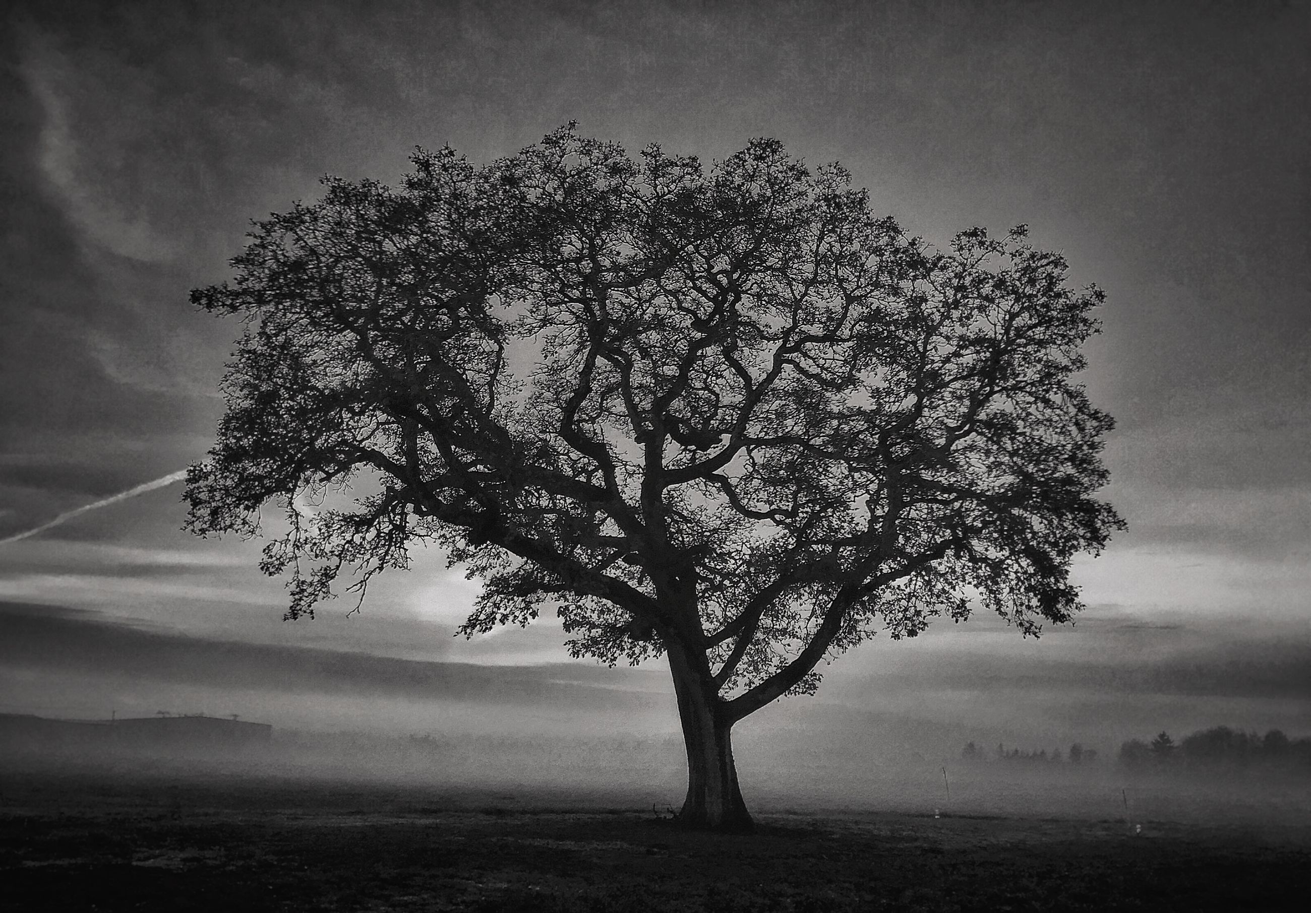 tree, tranquility, tranquil scene, beauty in nature, branch, nature, sky, silhouette, scenics, bare tree, growth, landscape, single tree, field, tree trunk, non-urban scene, idyllic, outdoors, dusk, no people