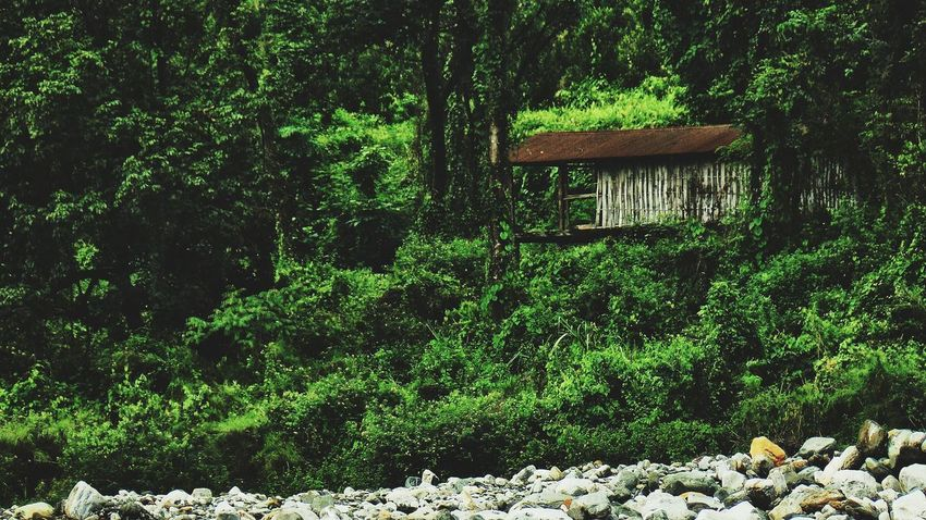 Local Houses Near The River Nature Tree No People Day Outdoors Beauty In Nature