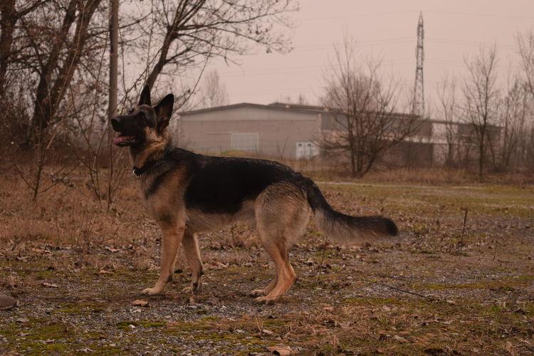 Alertness Animal Animal Themes Curiosity Dog Domestic Animals Mouth Open No People One Animal Pets Portrait Zoology
