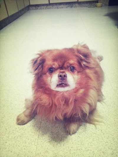 Coco!! Happy Birthday! 10yearstogether