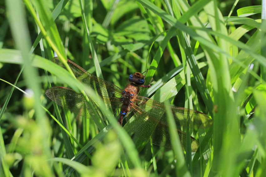 Animal Themes Beauty In Nature Close-up Day Focus On Foreground Grass Green Green Color Growth Insect Nature No People Outdoors Plant Selective Focus Wildlife