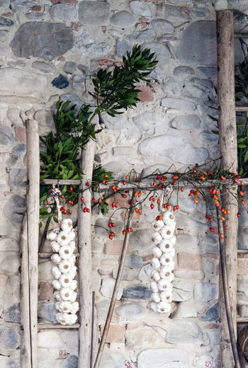 Garlic from italian garlic capital city Garlic Architecture Building Built Structure Day Decoration Garlic Clove Nature No People Outdoors Plant Religion Tree Wall Wall - Building Feature