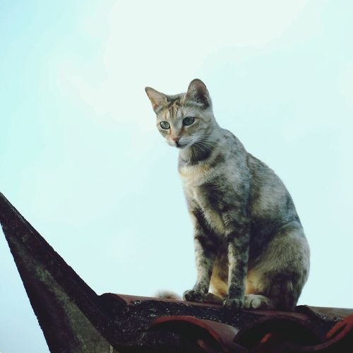 Cat Vscobrasil VSCO Vscocam First Eyeem Photo
