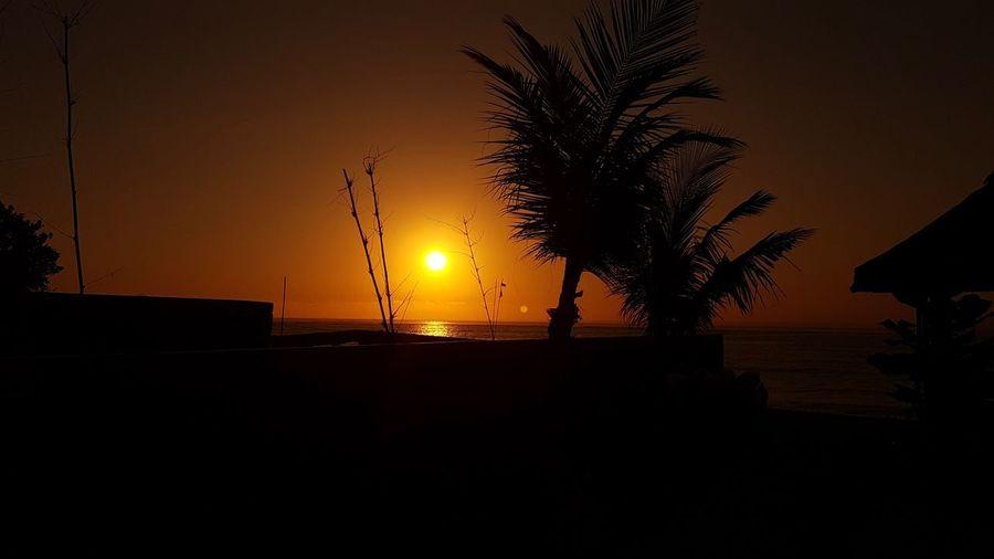 Sunset Silhouette Sunset Sky Orange Color Tree Water Nature Scenics - Nature Sun Beach Outdoors Sea