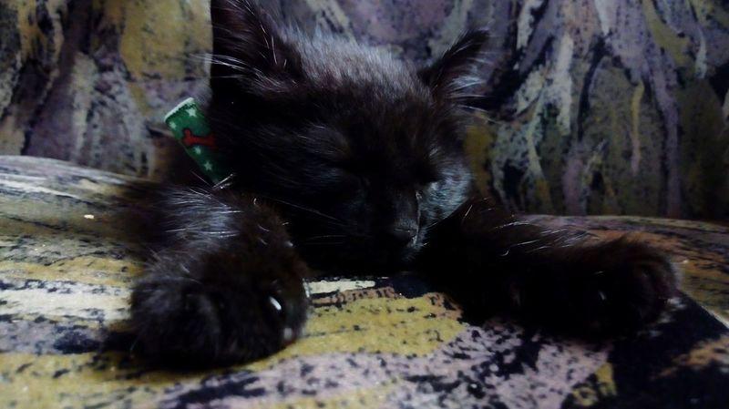 Dormir One Animal Animal No People Domestic Animals Pets Green Color