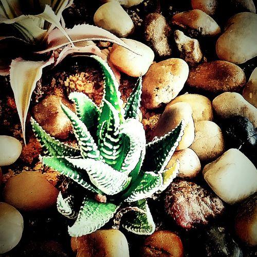 Miniture cactus Taking Photos Cactus Garden Miniture