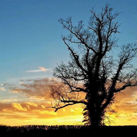 Blickling Hall Silhouette Sunset Norfolk Uk