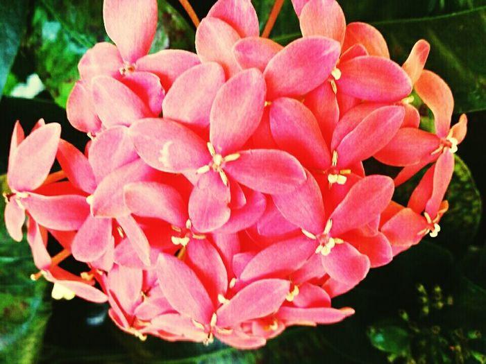 Coral By Motorola Rio Grande Do Norte Brasil