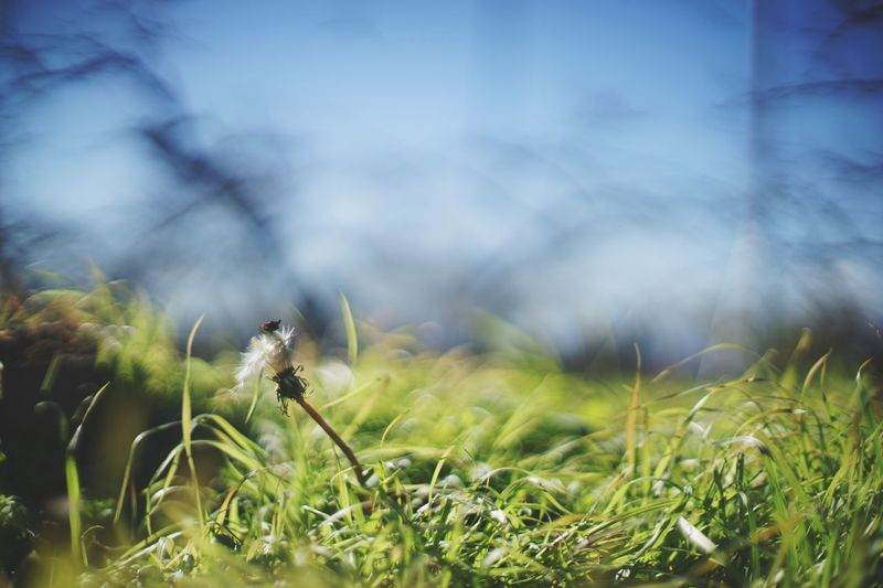 Grass Nature Growth Field No People Outdoors Green Color Day Plant Close-up Beauty In Nature Animal Themes Flower Sky Japan Light And Shadow EyeEm Best Shots Photoshoot EyeEmBestPics Beautiful Silhouette EyeEm 日本 Beauty In Nature Nature_collection
