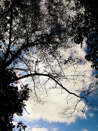 Tree Sky Nature Low Angle View No People Beauty In Nature Outdoors Day Bird