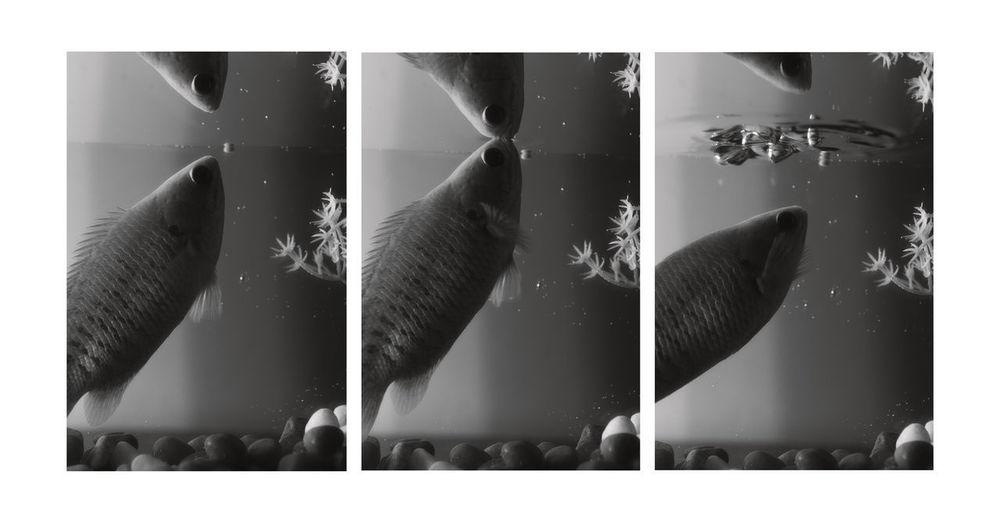 Digital composite image of fish swimming in sea