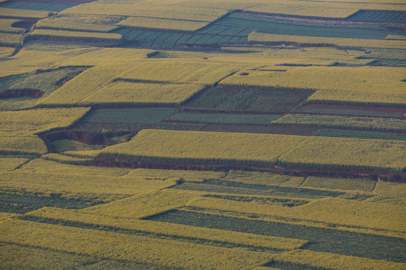 Landscape Environment No People Scenics - Nature Agriculture High Angle View Land Day Rural Scene Nature Field Yellow Tranquil Scene Farm Tranquility Pattern Beauty In Nature Outdoors Full Frame Aerial View