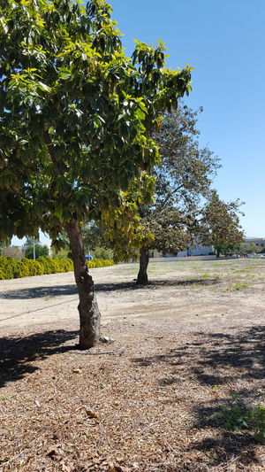 Landscapes With WhiteWall Tustin Vacant Lot Old Town Tustin