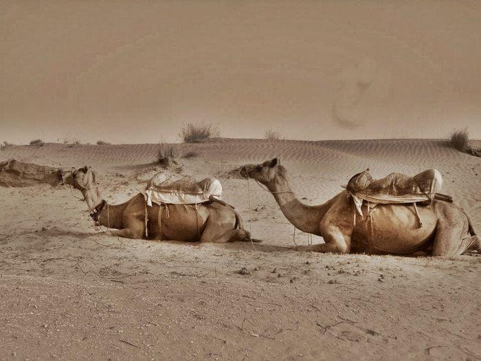 Arid Climate Desert Heat Humpdayrelaxation Non-urban Scene Remote Resting Scenics Tired Uniform Zen