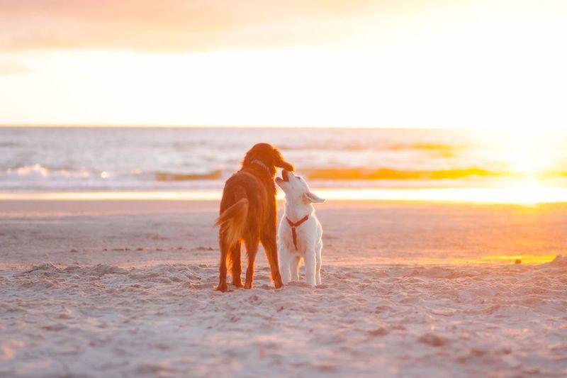 Love Kiss Love Sky Sea Land Beach Animal Water Horizon Animal Themes Sunset Pets Horizon Over Water Domestic One Animal Domestic Animals Mammal Dog Canine Vertebrate Nature Beauty In Nature My Best Photo