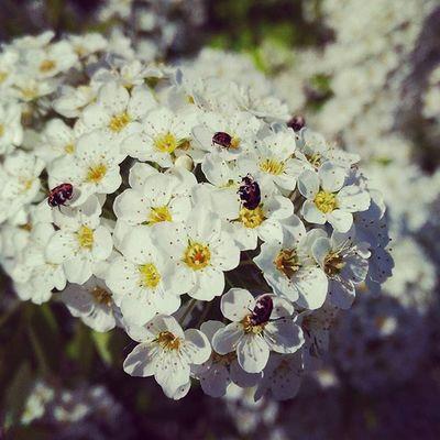 Photo Flowers Nature Art Streetphotography Sun Spring