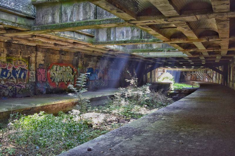 Abandoned railway under botanic gardens Abandoned Abandoned & Derelict Urbanexploration Railway Disusedrailways EyeEm Best Shots Trees Rust Nobody Urban Architecture_collection Building Graffiti Tunnel Exploration Botanic Garden Forgotten Glasgow Forgotten Railway