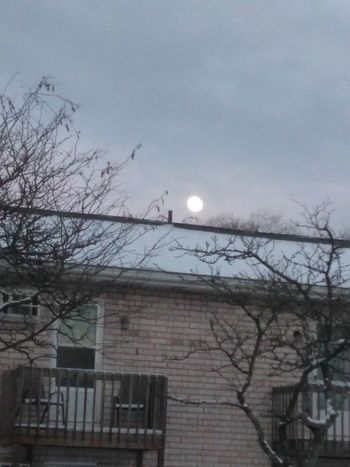 Supermoon2017 Supermoon Nature Nature Photography Moon Bare Tree Architecture Built Structure Branch Tree Low Angle View Astronomy Outdoors Sky No People Building Exterior Nature Beauty In Nature Day
