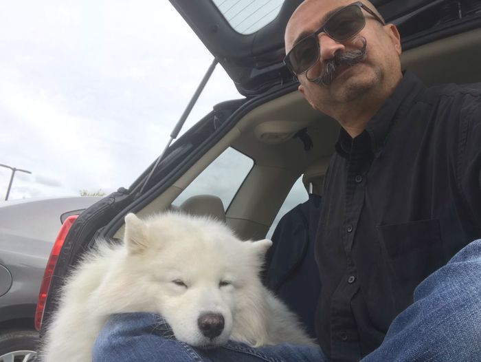Minicooperswag MiniCooper Canine Real People Mammal Domestic One Animal Pet Owner Car Motor Vehicle