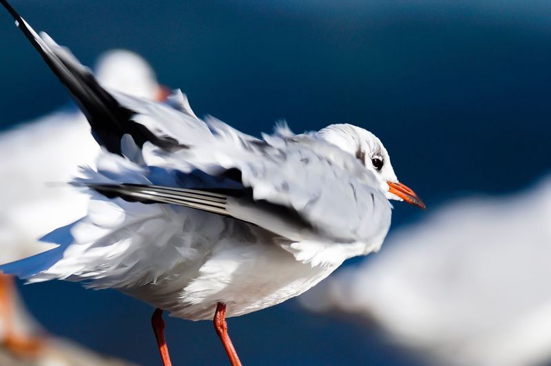 Lachmöwe Gull Seagull Bird Water Bird Animal Themes Animals In The Wild Wildlife Close-up Focus On Foreground Nature Beauty In Nature White Beauty In Nature Flensburger Förde Germany One Animal