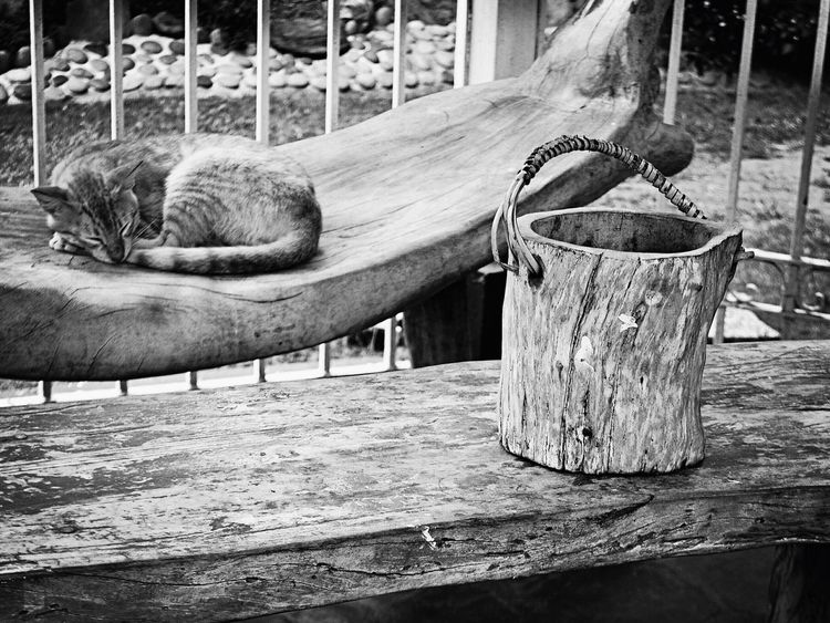 Zzzz Cats Sleeping Texture Blackandwhite