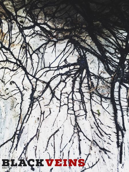 Black Veins. P292 IPhoneography Onephotoaday 365project2016 Roots Roots Of Tree Nature Abstract Nature Typography Beauty In Nature Outdoors Camping Out Low Angle View