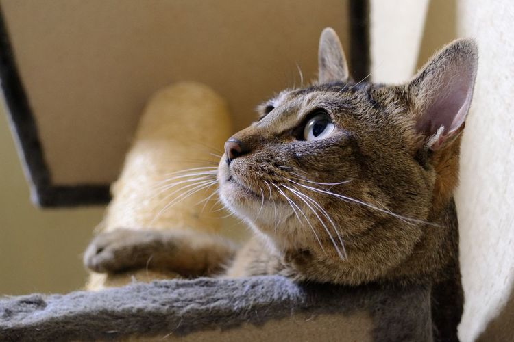 Low Angle View Of Cat Looking Away