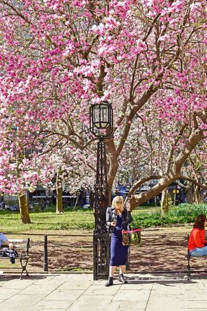 City Park Park Nature Pink Flowers Flower Pink Flower Tree Plant Tree Growth Day Nature Park Park - Man Made Space One Person Lifestyles Flower Flowering Plant Beauty In Nature Women Outdoors Sunlight