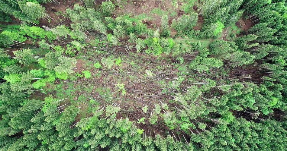 Forest Photography Nature Photography Summer Exploratorium Aerial Shot Aerial Photography Picea Abies Wind Power Backgrounds Full Frame High Angle View Close-up Grass Green Color Growing Abstract Backgrounds