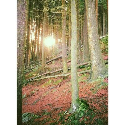 Forest Sunshine Phoneography Android Wales Trehafod Igwales