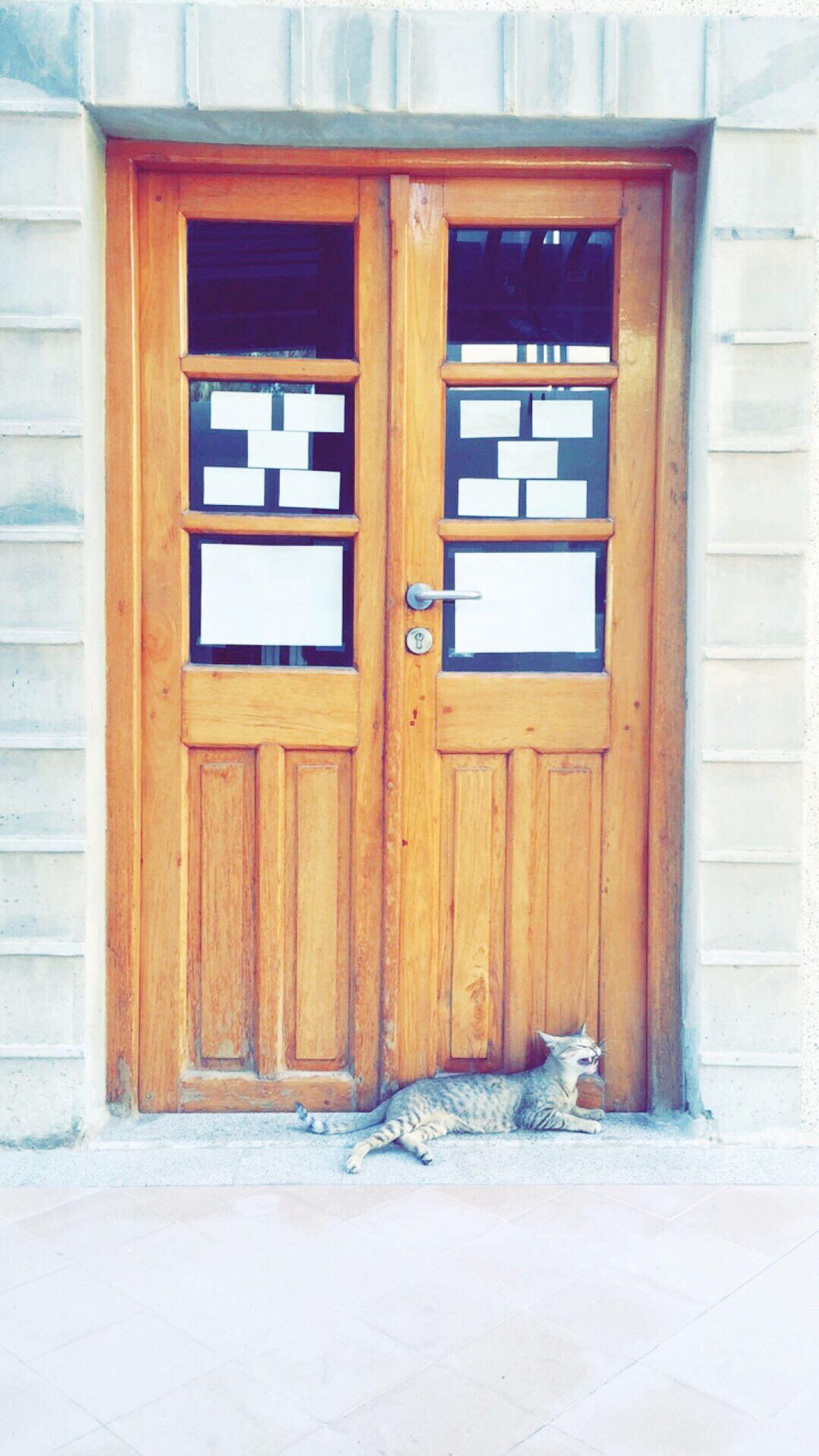 door, day, window, architecture, no people, built structure, building exterior, wood - material, outdoors, doorway, open door, mammal