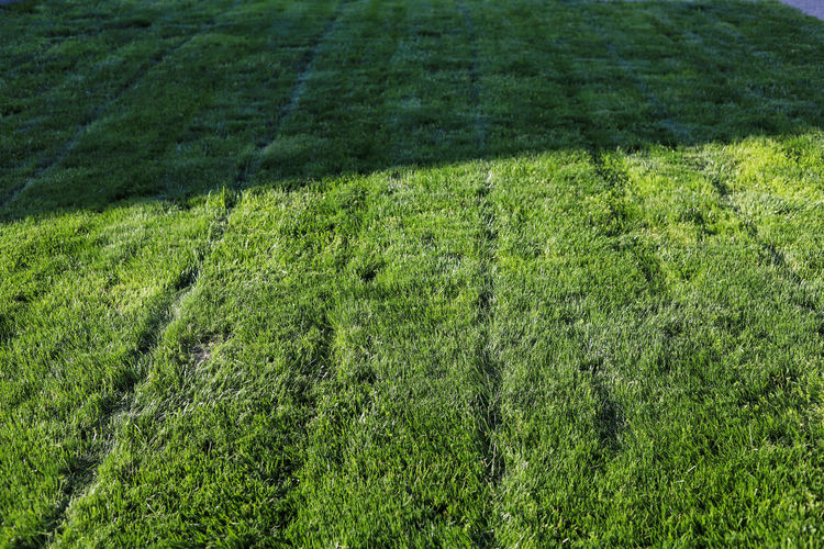 High angle view of grassy field