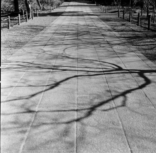 Analogue Photography Black & White Film Japan Japan Photography Japanese Culture Shadows & Lights Trees Analog Blackandwhite Blackandwhite Photography Diminishing Perspective Film Photography Filmcamera Filmisnotdead Hasselblad Light And Shadow Outdoors Shadow Shadows Sunlight The Way Forward Tree Tree_collection  Walkway