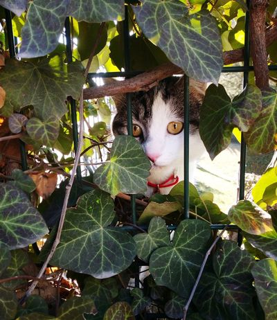 Ankara Türkiye Animals Natural Leaf Close-up Plant Green Color Cat Pets