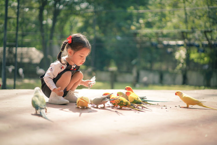 Cute girl looking at birds eating food on footpath against trees at park