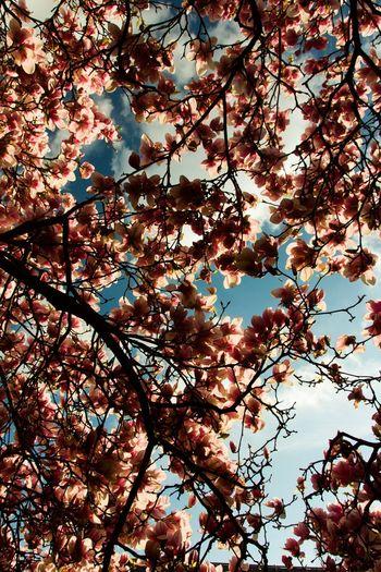 Blossom EyeEm