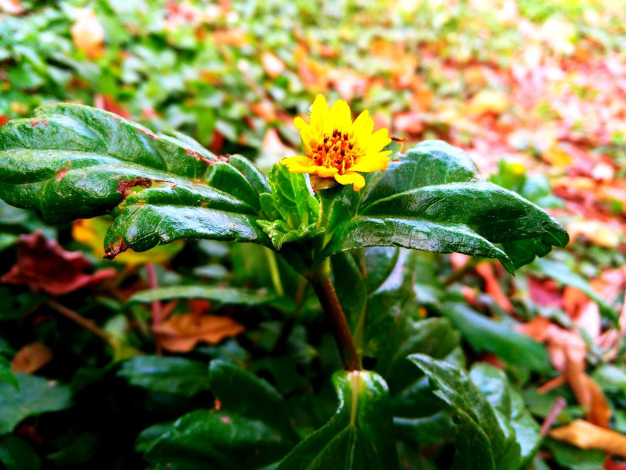 leaf, growth, plant, flower, green color, nature, beauty in nature, outdoors, fragility, no people, petal, freshness, flower head, day, blooming, close-up