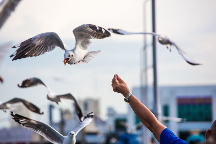 Cropped hand of person feeding seagull against sky