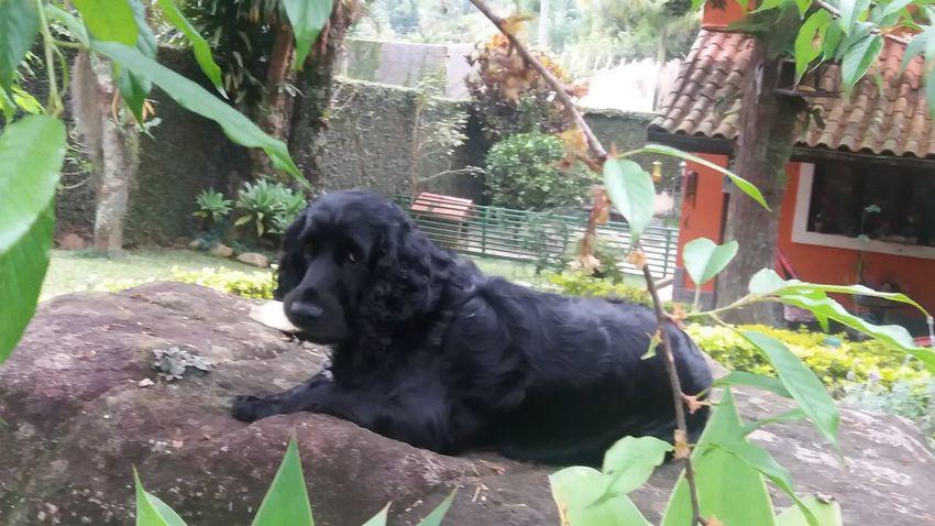 Pets Animal Themes Domestic Animals Black Color One Animal Dog Nofilterneeded ☺☺ Takealookatthis Nothingisordinary_ Pet Portraits