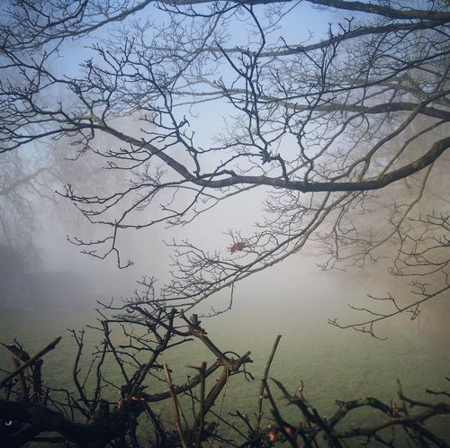 Nature Tree Beauty In Nature Tranquility Sky Bare Tree Branch No People Low Angle View Scenics Growth Tranquil Scene Fog Day Live For The Story