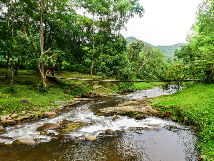 Scenic view of stream amidst trees in forest